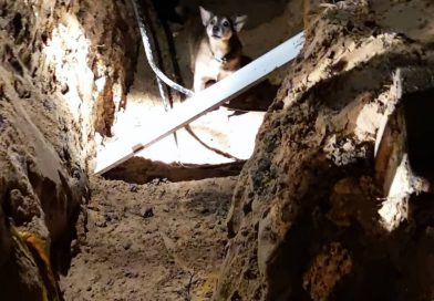 Hilfloser Hund in Baugrube