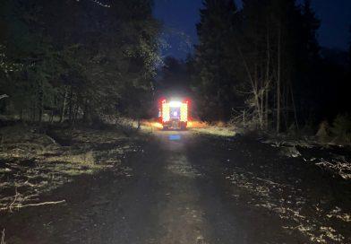 Feuer 1 – Brennender Baumstumpf im Wald