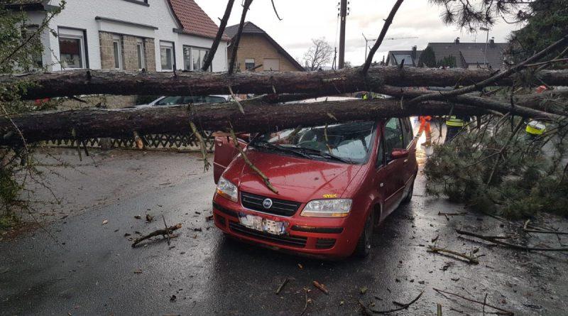 Baum fällt auf PKw